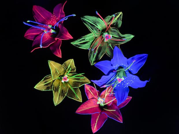 teatro sensorial (flores)